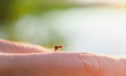 Τρεις τρόποι για να απαλλαγείτε από τα κουνούπια