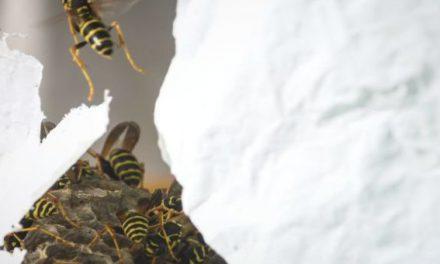 Σε τσιμπήσε μέλισσα, σφήκα, δράκαινα ή μέδουσα; Να τι πρέπει να κάνεις