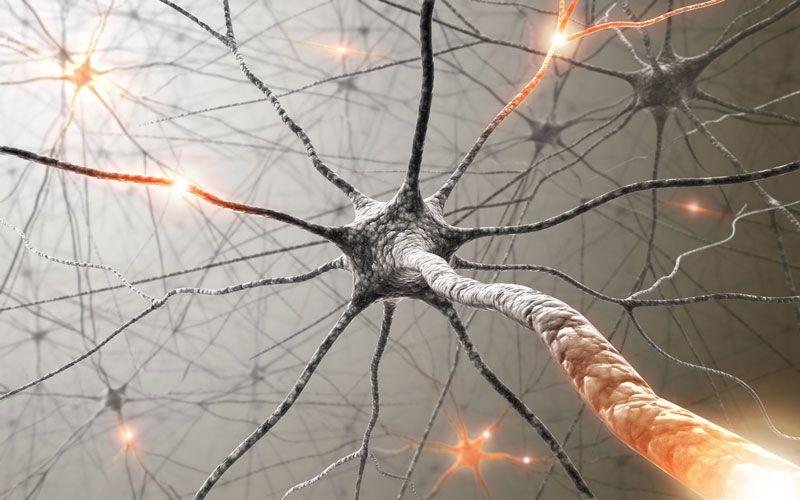 7 τρόποι για να αναπτυχθούν νέοι νευρώνες σε οποιαδήποτε ηλικία